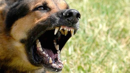 dog-attack-01